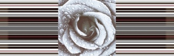 Decor Rose 02
